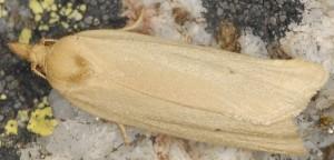 Avaria hyerana 2B 5