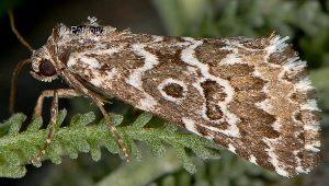 Alvaradoia numerica 2
