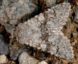 Antitype suda 1