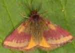 Lythria cruentaria 66 2